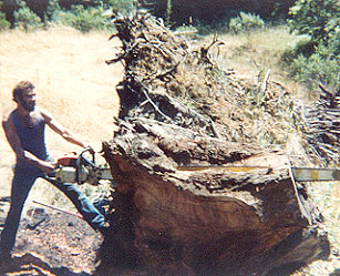 L. Daryl Stokes With 7' Chain Saw